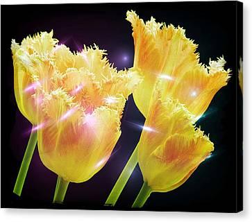 Sunshine Tulips Canvas Print by Debra  Miller