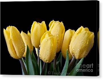 Sunshine Tulips Canvas Print by Tracy  Hall