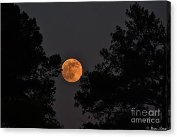 Super Moon Canvas Print by Marc Mesa