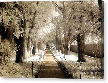 Surreal Dreamy Infrared Sepia - Hopeland Gardens Park South Carolina Pathway Nature Landscape  Canvas Print by Kathy Fornal