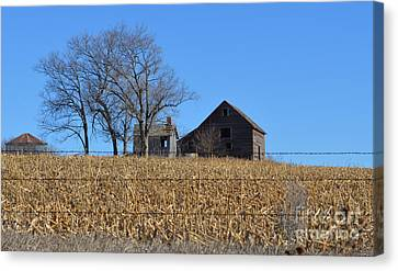 Surrounded By Corn Canvas Print by Renie Rutten
