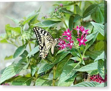 Swallowtail Butterfly 02 Canvas Print by Arik Baltinester