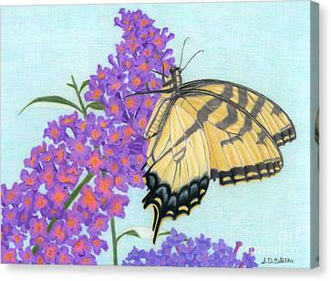 Swallowtail Butterfly And Butterfly Bush Canvas Print by Sarah Batalka