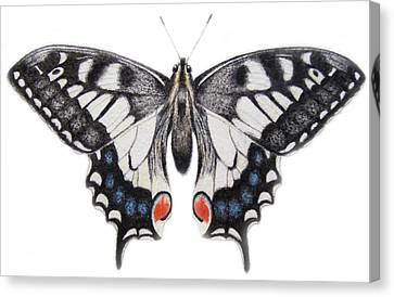 Swallowtail Canvas Print by Ele Grafton
