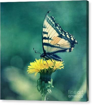 Swallowtail Canvas Print by Priska Wettstein