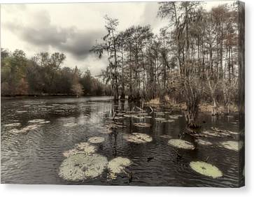 Swamp Alive Canvas Print by Stellina Giannitsi