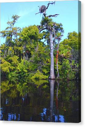 Swamp Land Canvas Print by Carey Chen