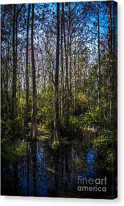 Swampland Canvas Print by Marvin Spates