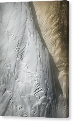 Swan Detail Canvas Print by Andy Astbury