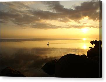 Swan In Sea At Sunset Canvas Print by Gynt