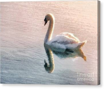 Swan On Lake Canvas Print by Pixel  Chimp