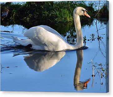 Swan Reflection Canvas Print by Barry Goble