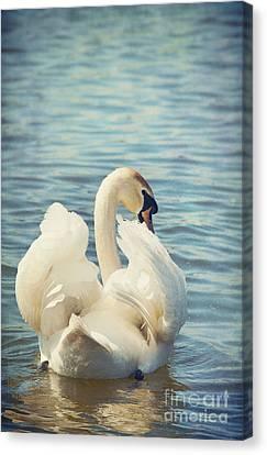 Swan Canvas Print by Svetlana Sewell