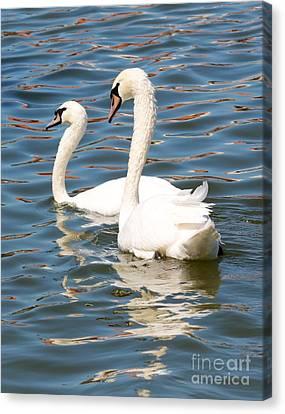 Swans And Swirls Canvas Print by Carol Groenen