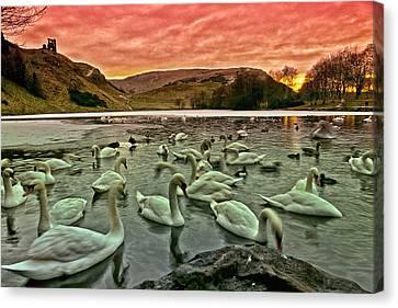 Swans In The Loch Canvas Print by Jean-Noel Nicolas