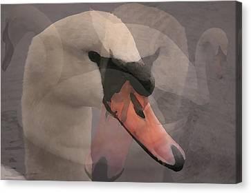 Swan's Tale Canvas Print by Melanie Melograne