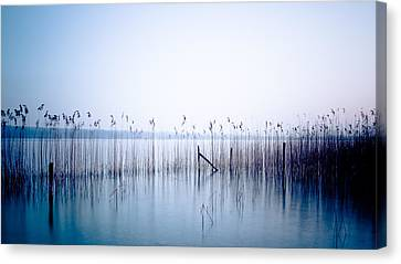 Sway Canvas Print by Alexander Kunz