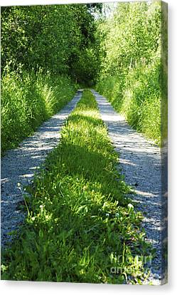 Swedish Road In Summer 2 Canvas Print by Micah May