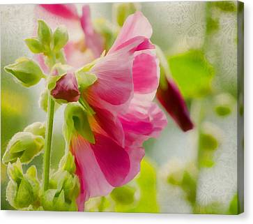 Sweet Hollyhock Canvas Print by Jordan Blackstone