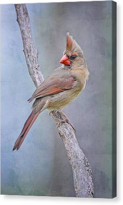 Sweet Little Lady Redbird Canvas Print by Bonnie Barry