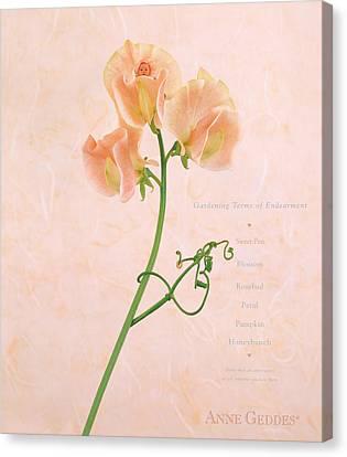 Sweet Pea Canvas Print by Anne Geddes