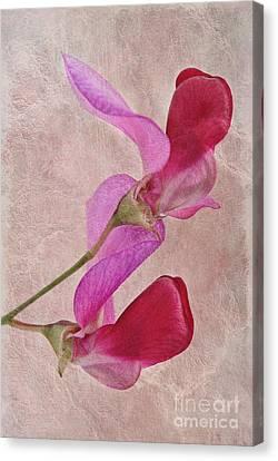 Sweet Textures 2 Canvas Print by John Edwards