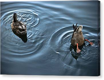 Swim And Take The Plunge Canvas Print by Allan Millora