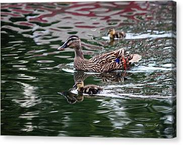 Swimming With Mama Canvas Print by Suzanne Gaff