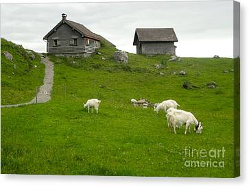 Switzerland Canvas Print by Gregory Dyer