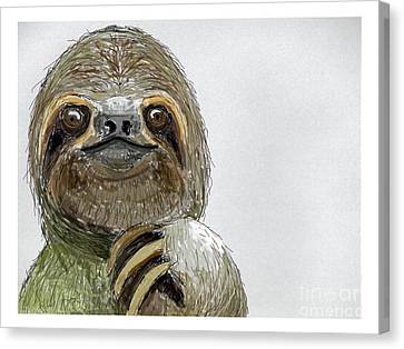 Sydney The Three-toed Sloth Canvas Print by John Gaffen