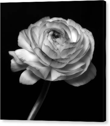 Black And White Roses Flowers Art Work Photography Canvas Print by Artecco Fine Art Photography