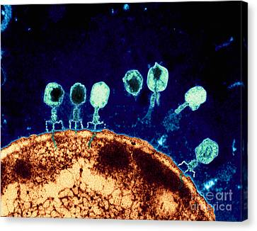 T-bacteriophages And E-coli Canvas Print by Eye Of Science