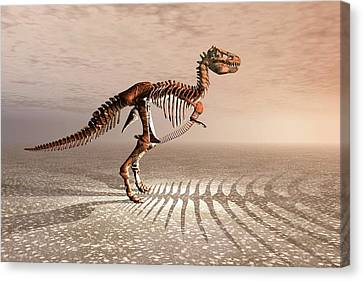 T. Rex Dinosaur Skeleton Canvas Print by Carol & Mike Werner