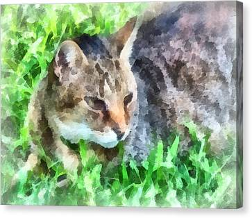 Tabby Cat Closeup Canvas Print by Susan Savad