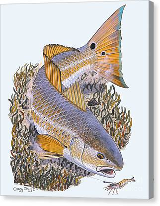 Tailing Redfish Canvas Print by Carey Chen