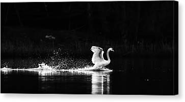 Take Off Canvas Print by Rose-Maries Pictures