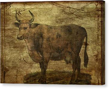 Take The Cow By The Horns Canvas Print by Sarah Vernon