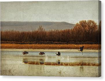 Takeoff Of The Cranes Canvas Print by Priscilla Burgers