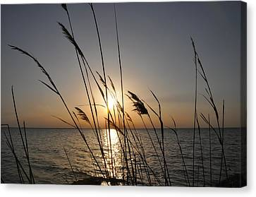 Tall Grass Sunset Canvas Print by Bill Cannon