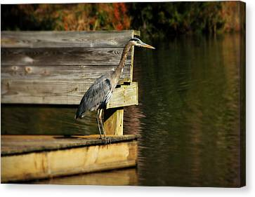 Tall Tail Fishing And Careful Consideration Canvas Print by Reid Callaway
