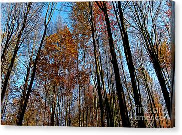 Tall Trees Autumn 2011 Canvas Print by Tina M Wenger