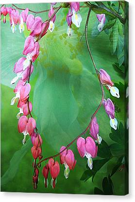 Tangled Love Canvas Print by Shirley Sirois