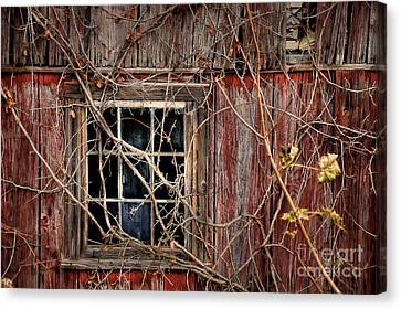 Tangled Up In Time Canvas Print by Lois Bryan