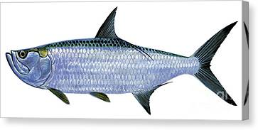Tarpon Canvas Print by Carey Chen