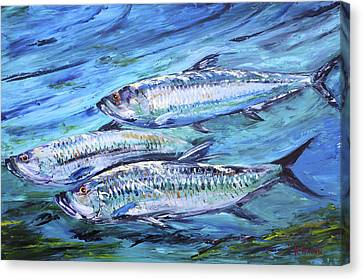 Tarpon On The Move Canvas Print by Kevin  Brown