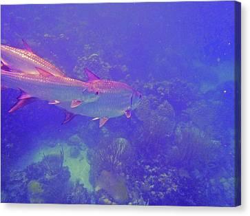 Tarpon Reef Canvas Print by Carey Chen