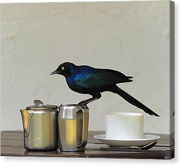 Tea Time In Kenya Canvas Print by Tony Beck