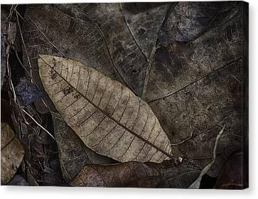 Teak And Mango Canvas Print by David Longstreath
