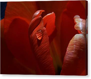 Teardrop Canvas Print by Connie Handscomb