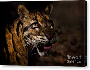 Tenacious Embers Canvas Print by Ashley Vincent